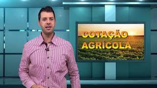 Capa do vídeo Condições das lavouras de trigo têm leve melhora no Paraná