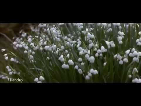 Regreso a Howards End: Fragmento de la muerte y las flores