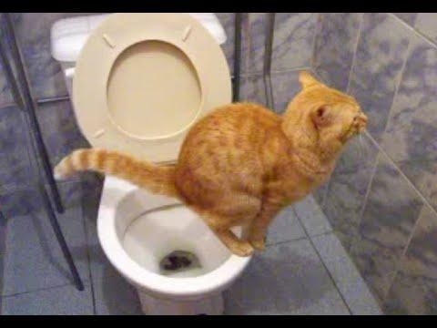 Gato no banheiro