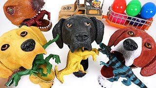 Video Dinosaurs are trying to take surprise egg! Crazy hungry dog and dinosaur summon! - DuDuPopTOY MP3, 3GP, MP4, WEBM, AVI, FLV Oktober 2018