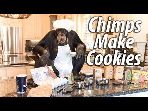 Chimps Make BIG Chocolate Chip Cookies | Myrtle Beach Safari
