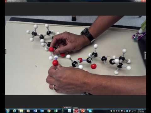 Lipids:  Ester linkage