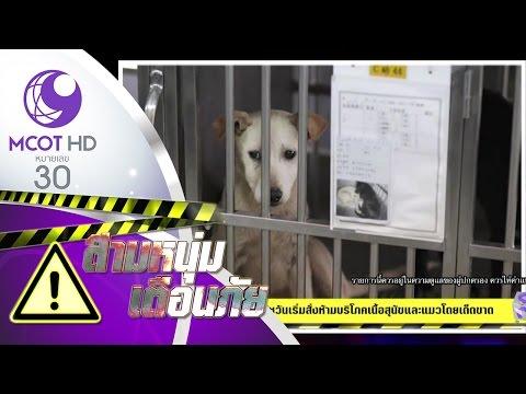 ไต้หวันเริ่มสั่งห้ามบริโภคเนื้อสุนัขและแมวโดยเด็ดขาด (11 พ.ค.60) สามหนุ่ม เตือนภัย | 9 MCOT HD