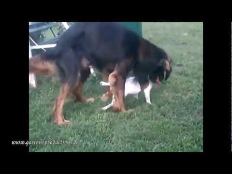 Lustiges Tiervideo mit Hund und Katze zum totlachen – Wenn ein Hund einen Kater hat + Die Luftnummer