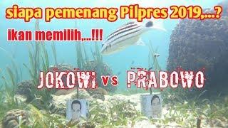 Video Ini dia Pemenang ramalan Pilpres 2019, Deti-detik ikan memilih [fishing chalengge] MP3, 3GP, MP4, WEBM, AVI, FLV Mei 2019