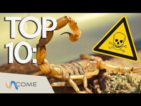 i 10 animali più velenosi del mondo!