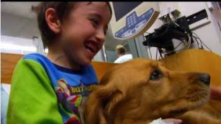 Holly The Pet Therapy Dog - Penn State Hershey Children's Miracle Network