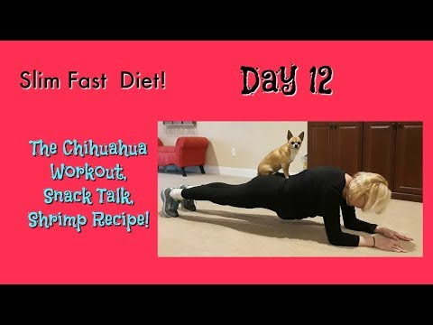 Slim Fast Diet, Day 12 - Chihuahua Workout, Snacks, Shrimp!
