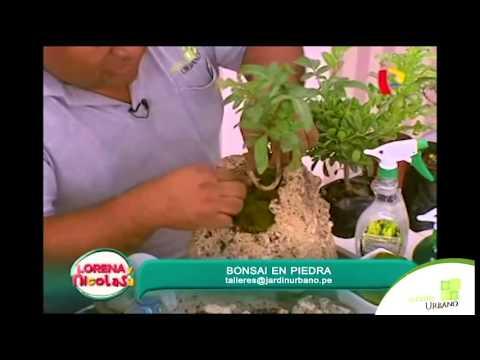 Como hacer bonsai en piedra