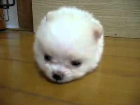 1千萬人看過的小狗,到底是多可愛!?