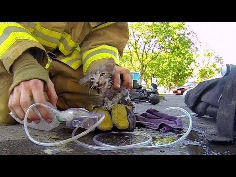 GoPro%3A Fireman Saves Kitten
