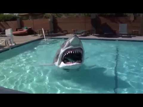 0 New Shark For The Pool