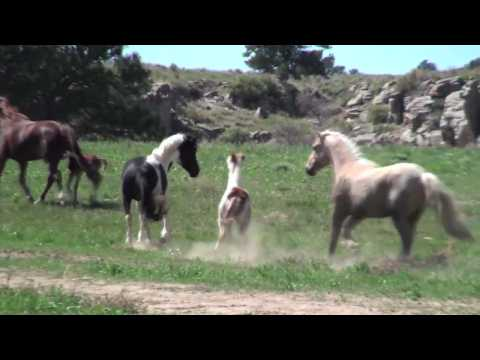 Guided Bus Tour at the Black Hills Wild Horse Sanctuary