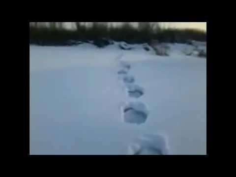 Yeti Sighting in Snow!!!