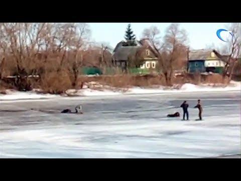 Братья Михейкины из Старой Руссы спасли тонущего человека