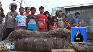 Video WOW!! Warga Tangkap Ular Piton Raksasa Berukuran 7 Meter - BIS 20/09 MP3, 3GP, MP4, WEBM, AVI, FLV November 2018