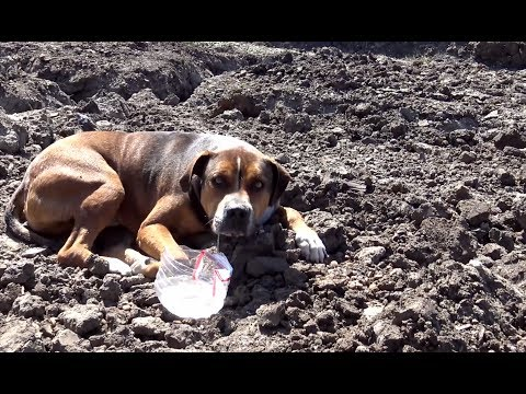 Abandoned dog in a construction site wouldn't move because he was so scared.