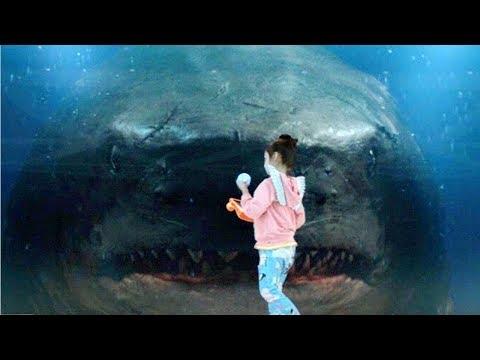 Megalodon Bites The Glass - The Meg (2018) Movie Clip HD