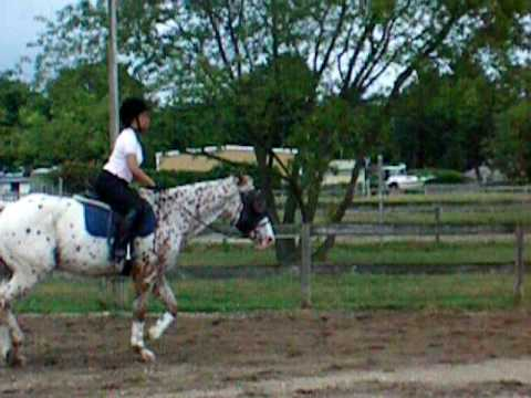equestrian ,lessons,beginner to advanced,long island,new york