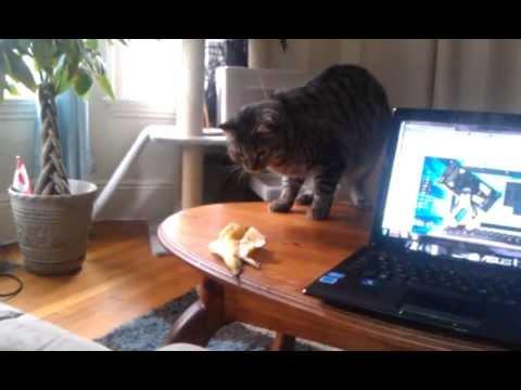好奇貓調查香蕉皮