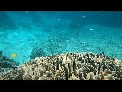 Οκινάουα: Το νησί Ισιγκάκι και ο μαγευτικός κοραλλιογενής ύφαλος…