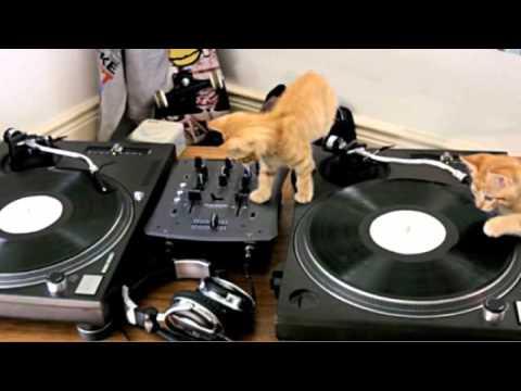 很專業的DJ喵星人