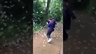 Dân phượt phi xe, giẫm đạp lên đàn bướm trắng ở rừng Cúc Phương