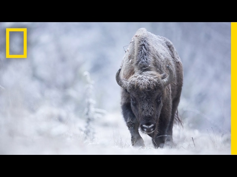 Join a Wildlife Photographer on the Hunt for the Perfect Shot   Short Film Showcase