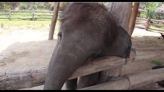 Baby Elephant Trying To Wake Up A Dog
