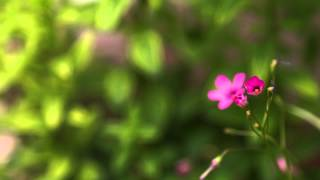 Time Lapse Flower Opening