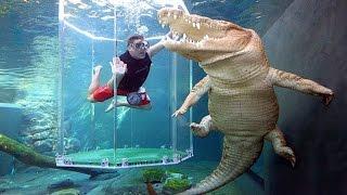 Video 7 Kolam Renang Paling Berbahaya Di Dunia !!! Berani Berenang Bareng Buaya MP3, 3GP, MP4, WEBM, AVI, FLV September 2017