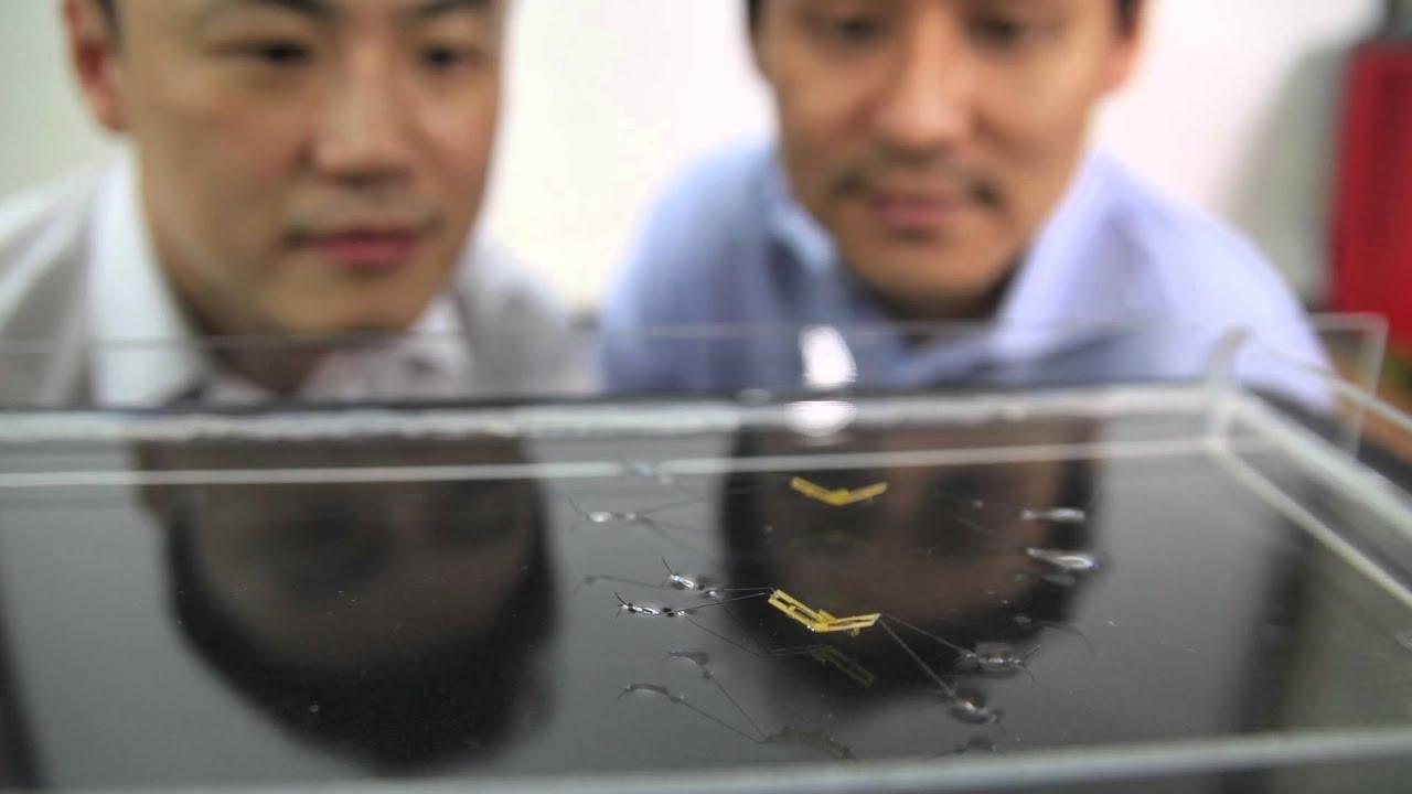Инженеры создали робота-водомерку