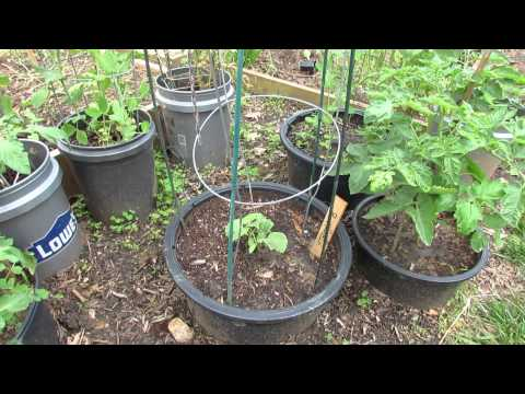 Small Space Container Gardening with 5 types of Vegetables – The Rusted Garden 2013