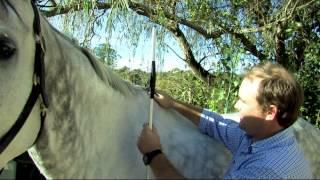 Hidez: Comment mesurer votre cheval