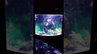 Download Lagu Corner Aquarium Mp3