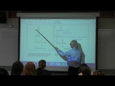 13. Ahern's BB 350 at Oregon State University - Lipids & Membranes