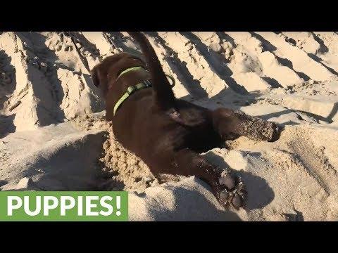 divertirsi-in-spiaggia