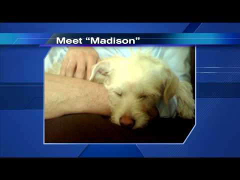 Tom Skilling shows off pics of his new dog Madison on WGN-TV Video