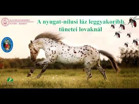 A nyugat-n�lusi l�z leggyakoribb t�netei lovakn�l