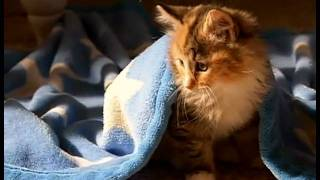 Will He Be Healthy? AVMA TV :60