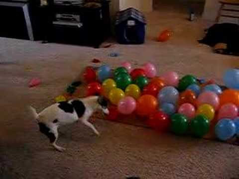 Balloon - Simon exacts his revenge on 74 evil latex orbs in a mere 57 seconds!