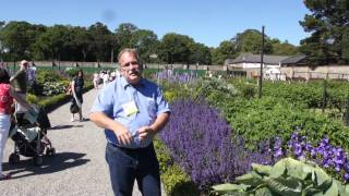 #428 Gartenshow Bloom (Irland, 2011) - Goji Monster in Irland