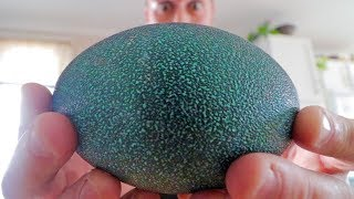 What comes out of an egg this BIG? The 50 day hatching adventure.