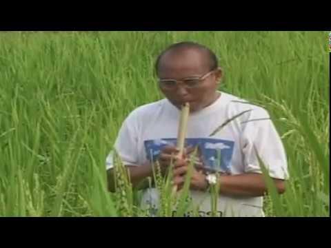 Raj Ntsia -  Ntsuab Kos Lauj (видео)