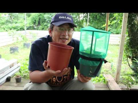 享受食農樂趣!金門泡麵盆栽自種自吃