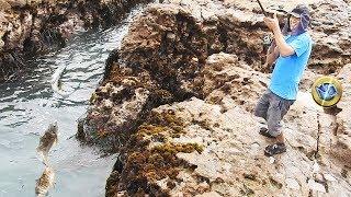 Video Pescador pesca Cabrillas grandes en el Pacífico Sur - Grabado todo en 4K MP3, 3GP, MP4, WEBM, AVI, FLV Januari 2019