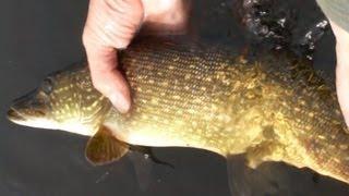 МК : Ловля щуки на съедобную резину видео Full HD [Мужская Компания]