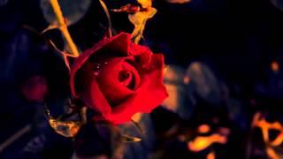 Video Robin S - Show Me Love (Bass King Bootleg) MP3, 3GP, MP4, WEBM, AVI, FLV Juni 2018