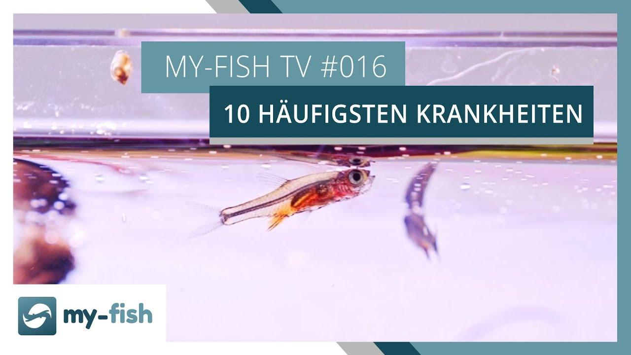 my-fish TV - Deine Nr. 1 Anlaufstelle für alle Themen rund um die Aquaristik 48