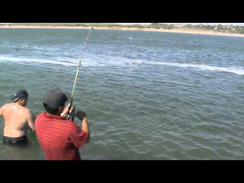 рыбалка в сирдаре